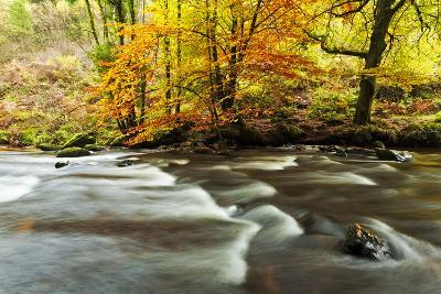 The River Teign and Whiddon Wood in Autumn.-Alex Hare-Photographic Print
