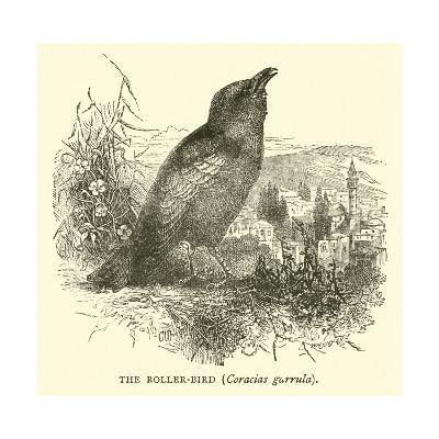 The Roller-Bird, Coracias Garrula--Giclee Print