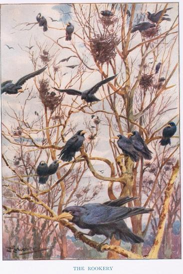 The Rookery, Illustration from 'Country Ways and Country Days'-Louis Fairfax Muckley-Giclee Print