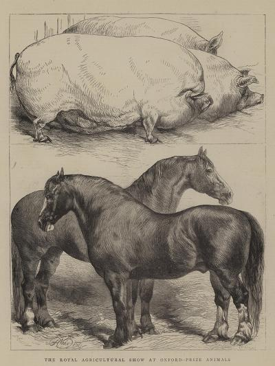 The Royal Agricultural Show at Oxford, Prize Animals-Harrison William Weir-Giclee Print