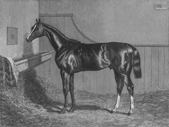 'The Rt. Hon. The Earl of Lichfields Elis. Winner of the St. Leger 1836', 1911-Unknown-Giclee Print