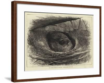 The Ruffed Grouse in Her Nest--Framed Giclee Print