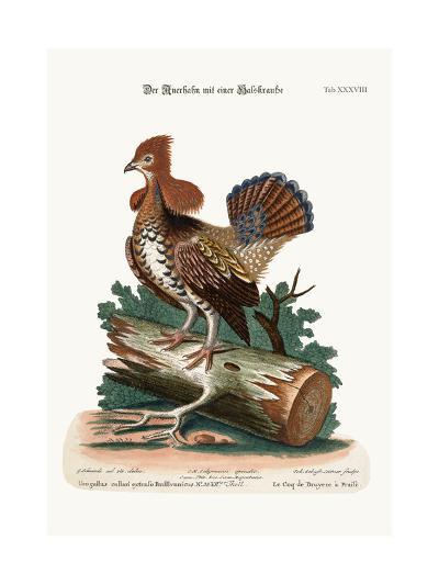 The Ruffed Heath-Cock or Grous, 1749-73-George Edwards-Giclee Print