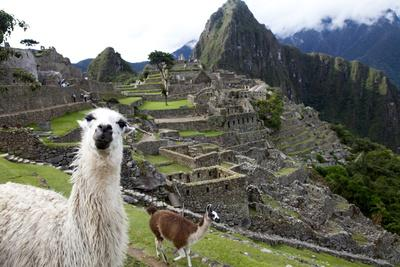 The Ruins At Machu Picchu and a Couple of Llamas-Kent Kobersteen-Premium Photographic Print