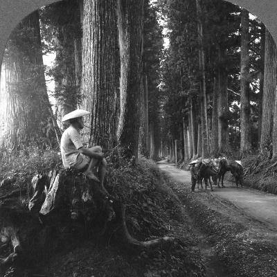 The Sacred Road to Nikko, Japan, 1905-BL Singley-Photographic Print