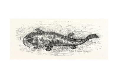 https://imgc.artprintimages.com/img/print/the-salamander_u-l-pvgncm0.jpg?p=0