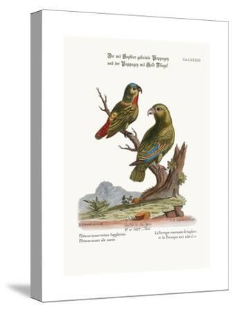 The Sapphire-Crowned Parrakeet, and the Golden-Winged Parrakeet, 1749-73-George Edwards-Stretched Canvas Print