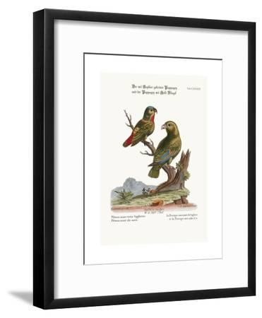 The Sapphire-Crowned Parrakeet, and the Golden-Winged Parrakeet, 1749-73-George Edwards-Framed Giclee Print