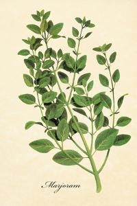 Marjoram by The Saturday Evening Post