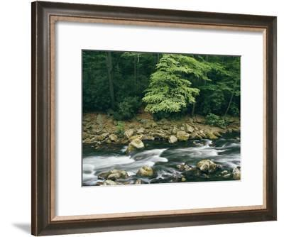 The Savage River Flows Swiftly over Rocks in a Wooded Area-Skip Brown-Framed Photographic Print