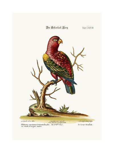 The Scarlet Lory, 1749-73-George Edwards-Giclee Print