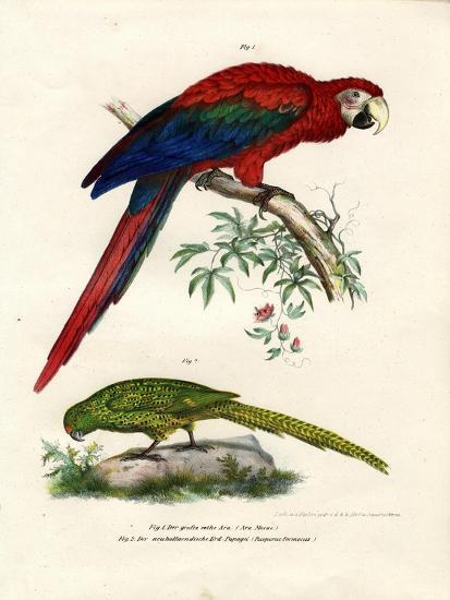 The Scarlet Macaw, 1864--Giclee Print