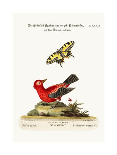 The Scarlet Sparrow and the Yellow Swallow-Tailed Butterfly, 1749-73-George Edwards-Giclee Print