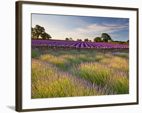 The Scent of Summer-Doug Chinnery-Framed Photographic Print
