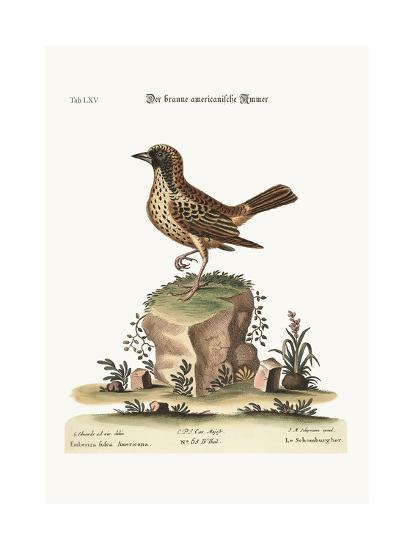 The Schomburger, 1749-73-George Edwards-Giclee Print