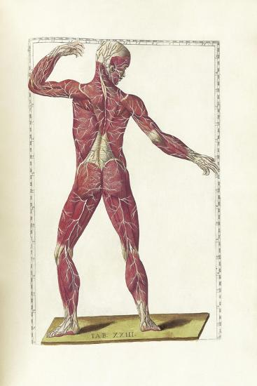 The Science of Human Anatomy by Bartholomeo Eustachi-Stocktrek Images-Art Print