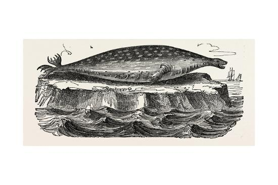 The Sea-Leopard, Sea Leopard--Giclee Print