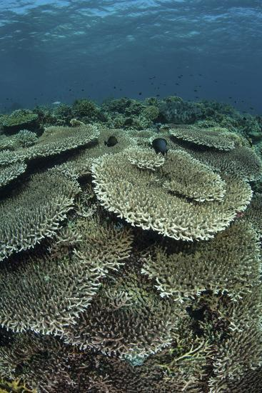 The Seafloor Is Covered by Reef-Building Corals in Indonesia-Stocktrek Images-Photographic Print