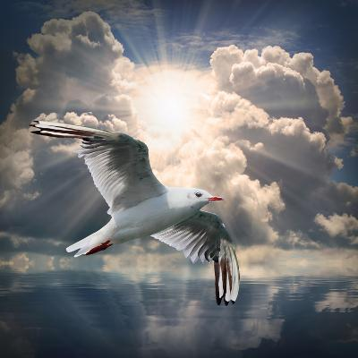The Seagull Flying Over A Sea Against A Dramatic Sky. Background From Nature-Kletr-Photographic Print
