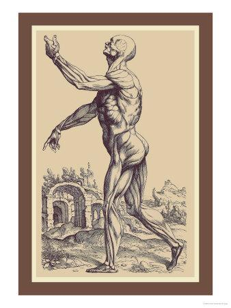 The Second Plate of the Muscles-Andreas Vesalius-Art Print