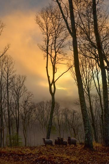 The Setting Sun Pokes Through Heavy Cloud Cover as a Small Flock of Sheep Stand in the Distance-Amy White and Al Petteway-Photographic Print