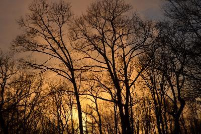 The Setting Sun Seen Through Heavy Cloud Cover and Silhouetted Trees-Amy & Al White & Petteway-Photographic Print