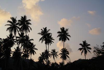 https://imgc.artprintimages.com/img/print/the-seychelles-la-digue-beach-palms-grand-anse-dusk_u-l-q11wk5k0.jpg?p=0