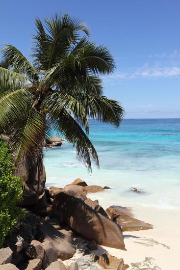The Seychelles, La Digue, Beach, Rocks, Palm, Anse Patates-Catharina Lux-Photographic Print