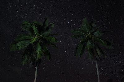 The Seychelles, La Digue, Palms, Starry Sky-Catharina Lux-Photographic Print