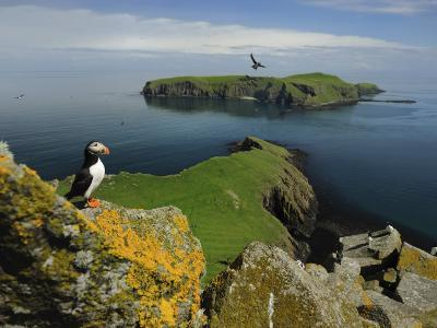The Shaint Islands are Breeding Grounds for Puffins and Razorbills-Jim Richardson-Photographic Print