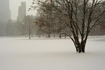 The Sheep Meadow in Central Park During a Blizzard-Kike Calvo-Photographic Print