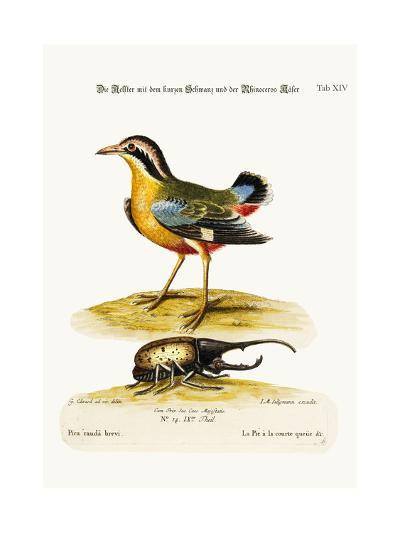 The Short-Tailed Pye and the Rhinoceros Beetle, 1749-73-George Edwards-Giclee Print