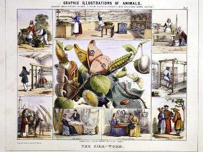 The Silk-Worm, C1850-Benjamin Waterhouse Hawkins-Giclee Print