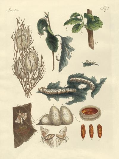 The Silkworm--Giclee Print