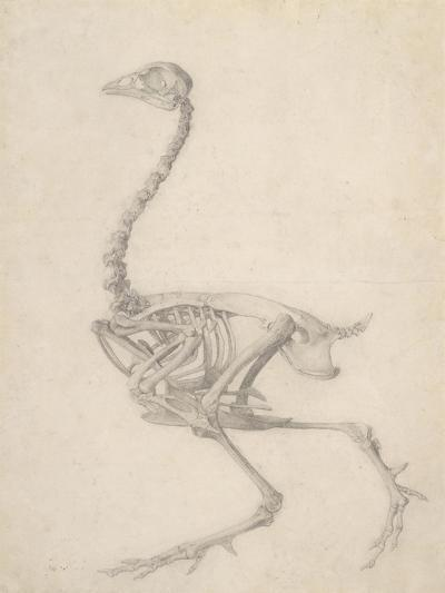 The Skeleton of a Fowl-George Stubbs-Giclee Print