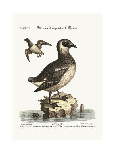 The Small Black and White Divers, 1749-73-George Edwards-Giclee Print