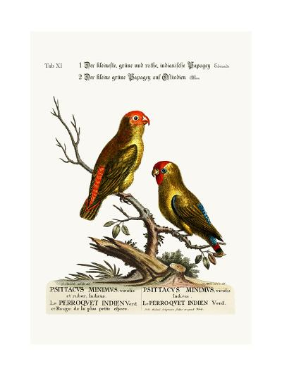 The Smallest Green and Red Indian Paroquet. the Small Green Parrot of East India, 1749-73-George Edwards-Giclee Print