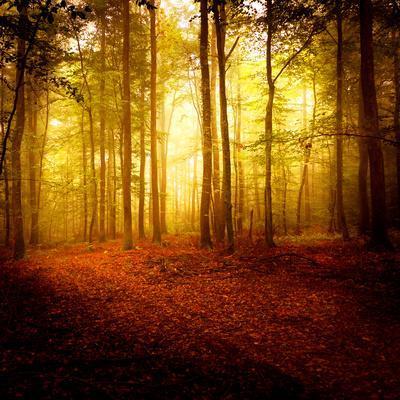 https://imgc.artprintimages.com/img/print/the-smell-of-autumn_u-l-phfcs70.jpg?p=0