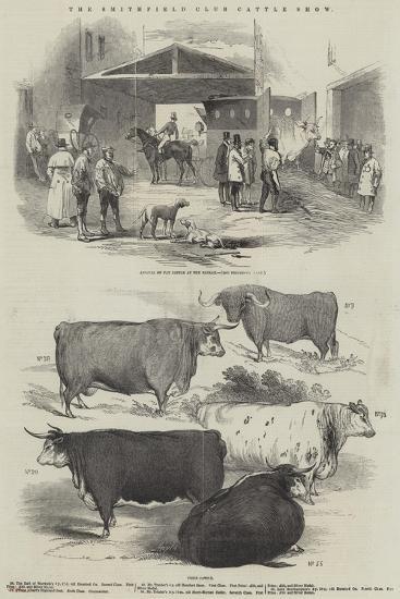 The Smithfield Club Cattle Show--Giclee Print