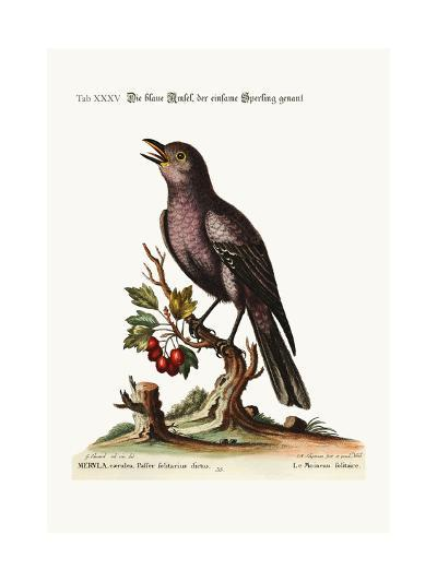 The Solitary Sparrow, 1749-73-George Edwards-Giclee Print