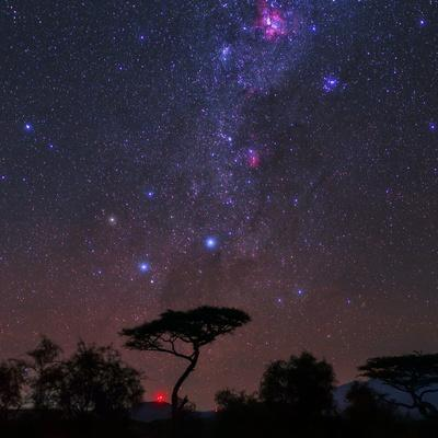 https://imgc.artprintimages.com/img/print/the-southern-cross-and-milky-way-over-a-tree-the-carina-nebula-is-the-red-cloud-at-top_u-l-poksd40.jpg?p=0
