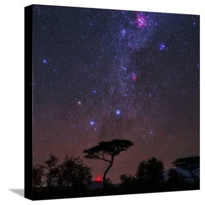 The Southern Cross and Milky Way over a Tree. the Carina Nebula Is the Red Cloud at Top-Babak Tafreshi-Stretched Canvas Print