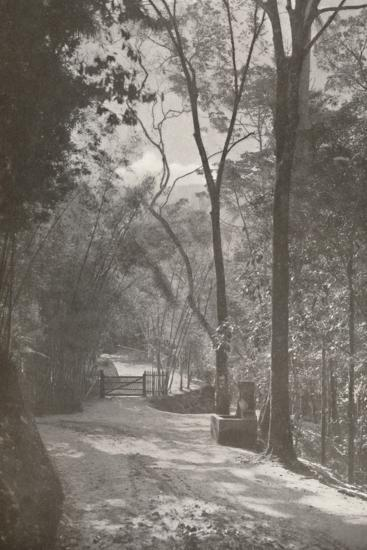 'The Spirit of Tijuca', 1914-Unknown-Photographic Print