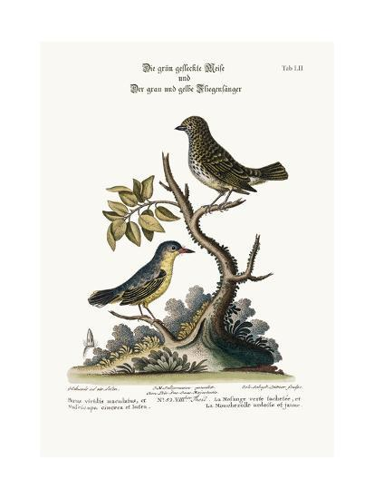 The Spotted Green Tit-Mouse, and the Grey and Yellow Flycatcher, 1749-73-George Edwards-Giclee Print