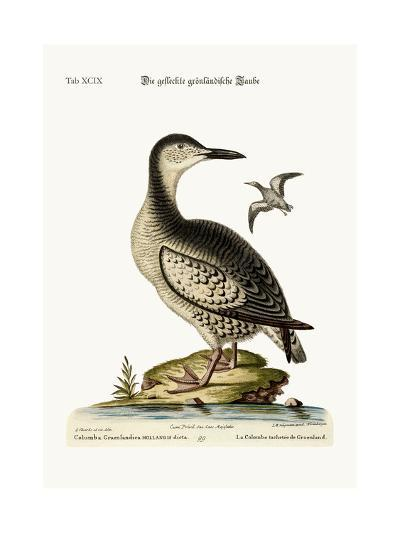 The Spotted Greenland Dove, 1749-73-George Edwards-Giclee Print