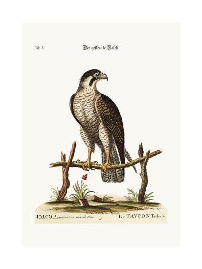 The Spotted Hawk or Falcon, 1749-73-George Edwards-Giclee Print