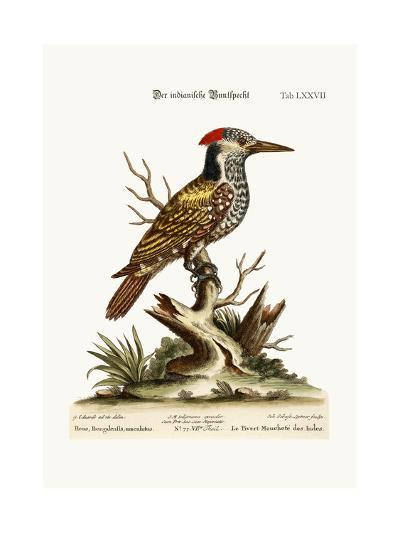 The Spotted Indian Woodpecker, 1749-73-George Edwards-Giclee Print