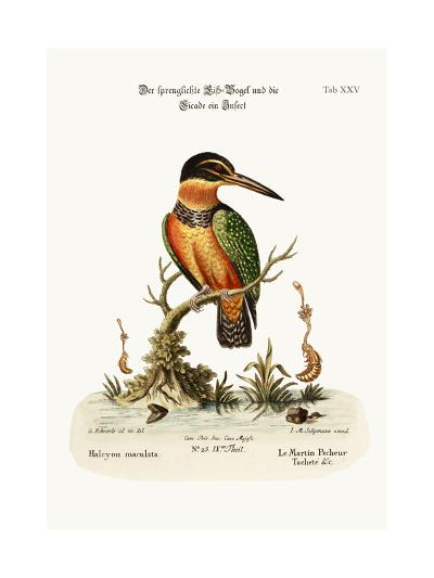 The Spotted Kingfisher, 1749-73-George Edwards-Giclee Print