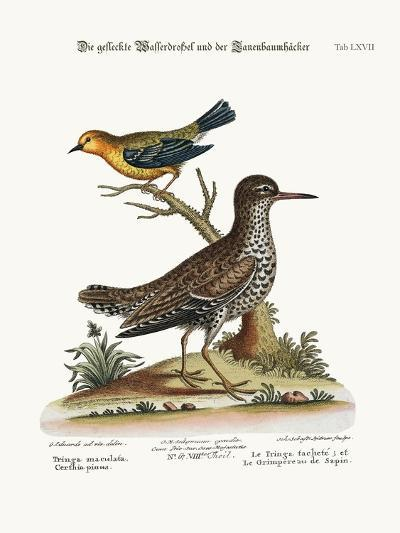 The Spotted Tringa, and the Pine-Creeper, 1749-73-George Edwards-Giclee Print