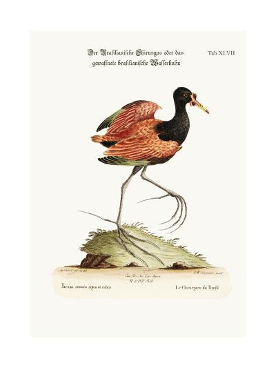 The Spur-Winged Water-Hen of Brasil, 1749-73-George Edwards-Giclee Print